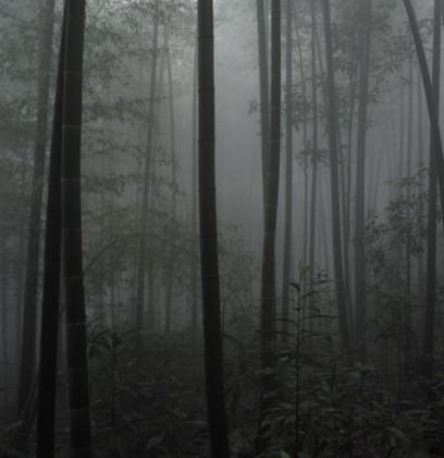 dinu-li-bamboo001