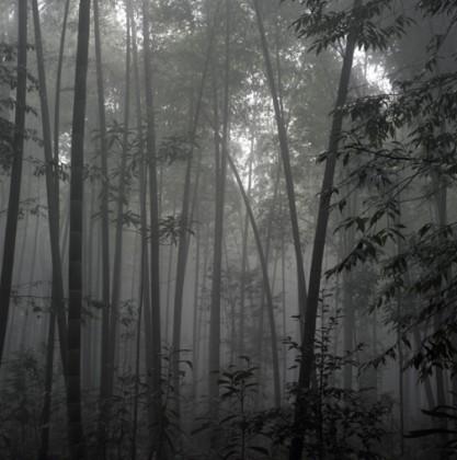 dinu-li-bamboo003
